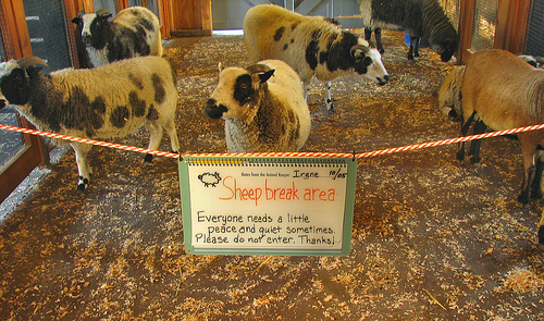 Sheep Break Area